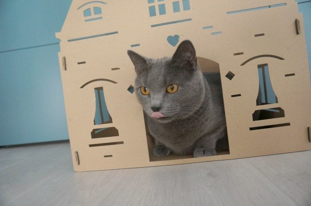 blue-like-that-maison-carton-chat