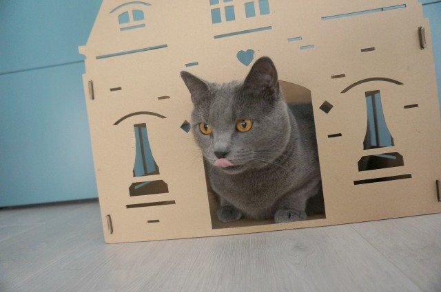 Nous deux : la maison pour chat, la phablette, et la dégustation de chocolat