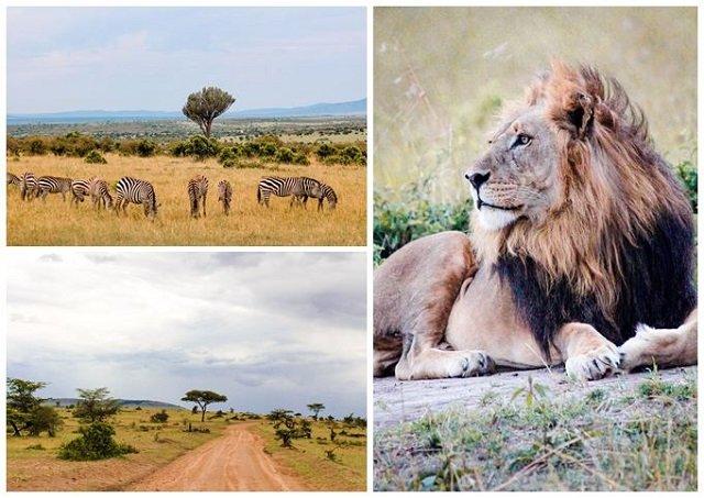 voyage de noce kenya safari