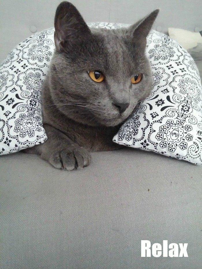 caturday blue le chat / publié par withalovelikethat.fr