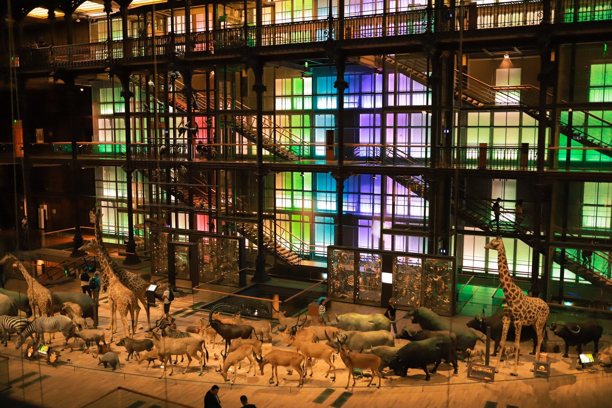 idées sorties Paris en famille / grande galerie de l'évolution